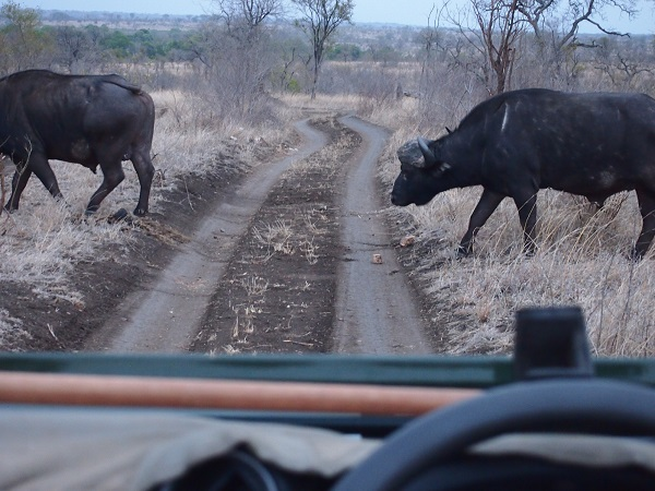 South Africa Safari 10