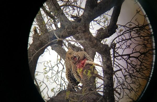 South Africa Safari 8