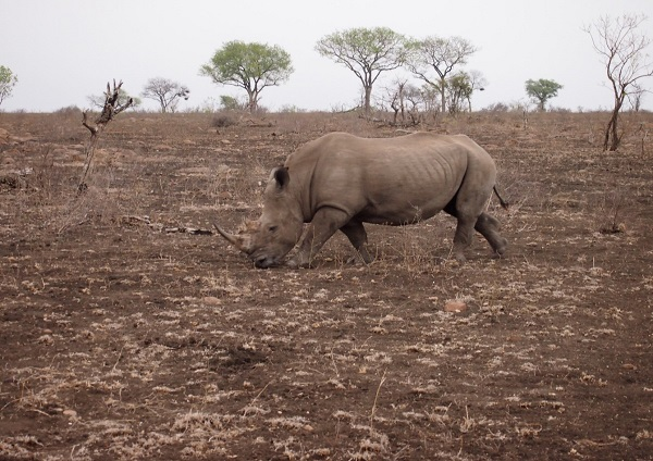 South Africa Safari 9