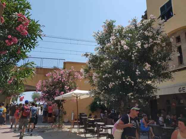 Cinque Terre Monterosso 13.jpg